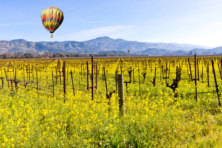 Food and Wine in Napa Valley - Balloon trips and the beautiful wineyard