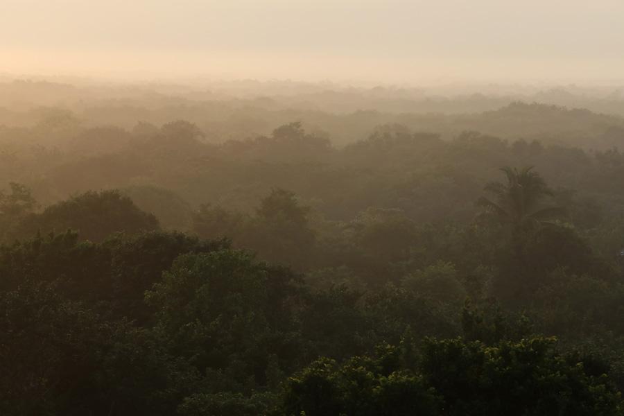 Nat Geo Expeditions Descubre Secretos Mayas - Deep forest jungle