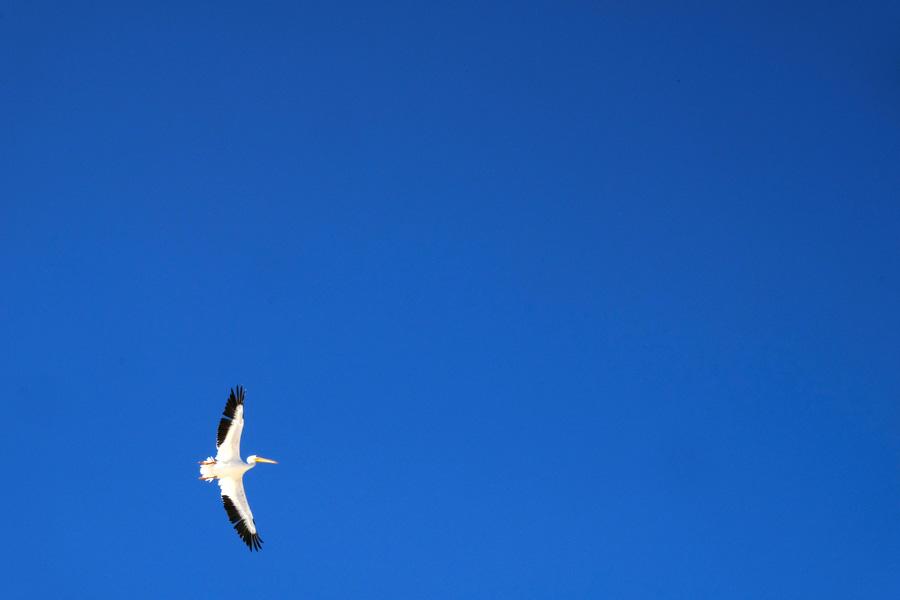 Nat Geo Expeditions Descubre Secretos Mayas - Flying bird