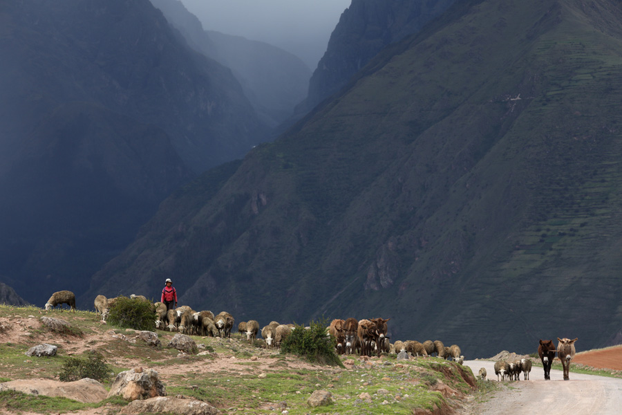 Splendors of the Inca Corporate Expedition - Sheeps and the mountains