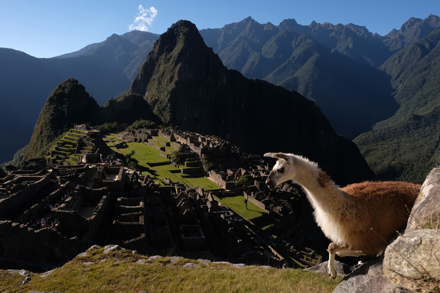 Splendors of the Yucatan - Llama and the Machu Picchu