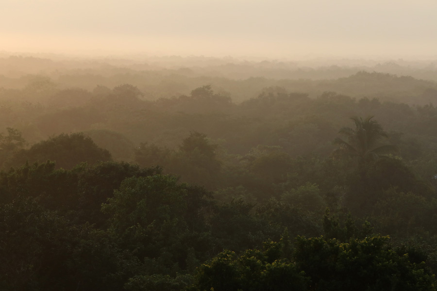 The Yucatan Peninsula land of the Maya forest