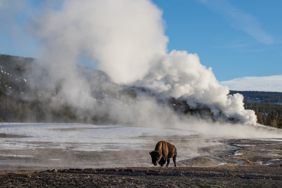 Yellowstone and the Grand Teton National Parks - Bisonte and a geyser