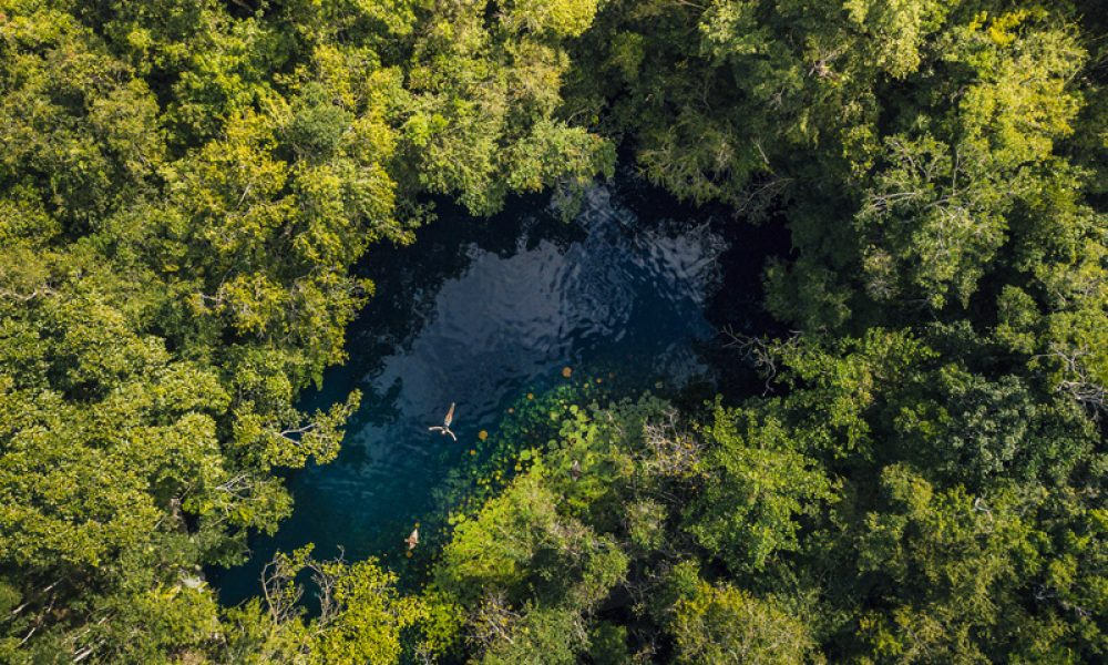 Culture and Wildlife in the Mayan Riviera - Swimming in the cenote in the woods