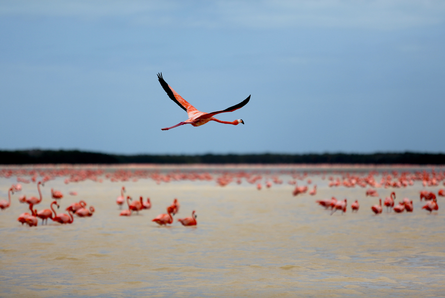where we have gone flamingo flying