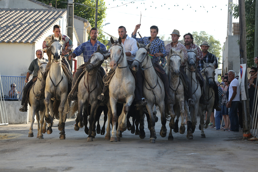 where we have gone Spain horse traditions